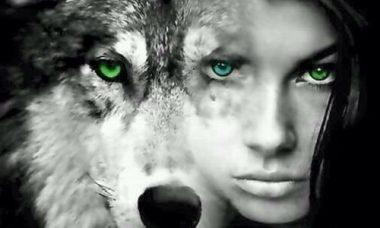 de mouton deviens loup