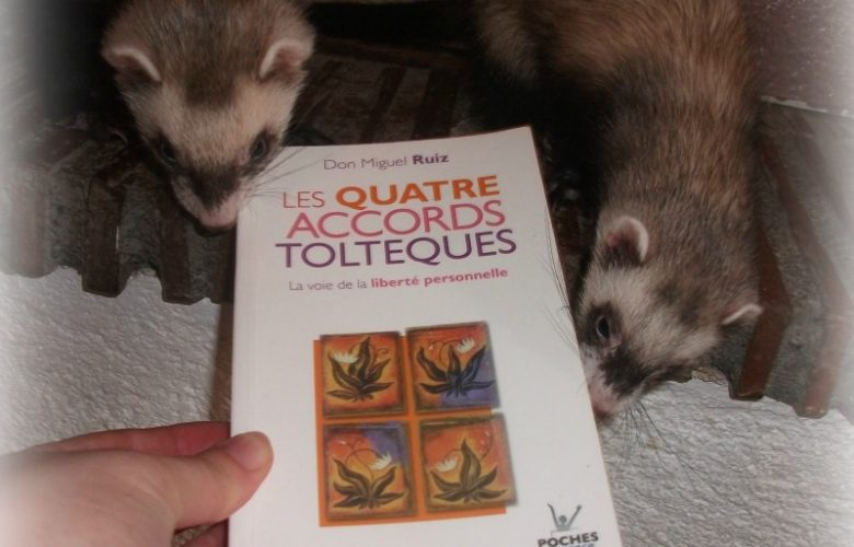 Les 4 Accords Toltèques lus par les furets
